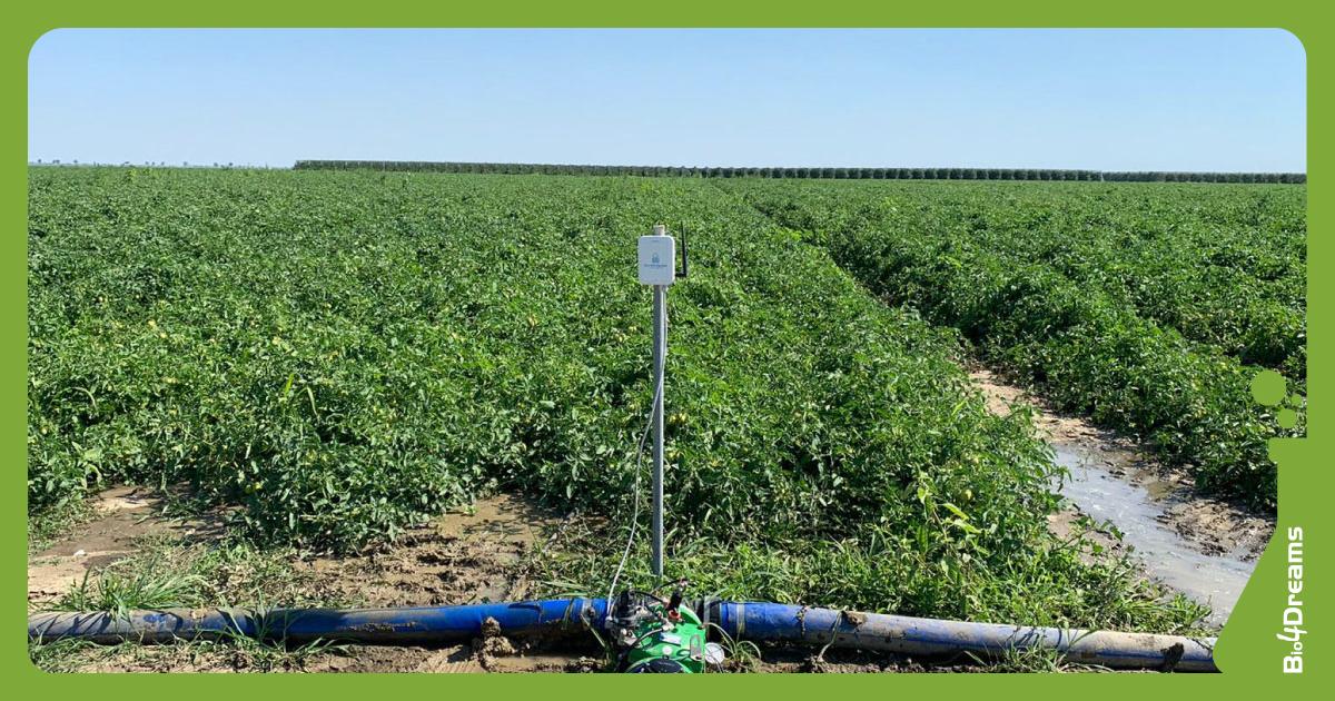 Sprechi acqua | Irrigazione sostenibile | Startup Bluetentacles